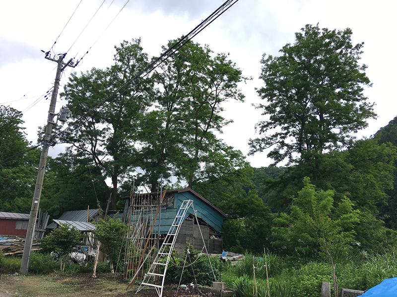 樹木の伐採 │ 黒石市U・I様 実績1